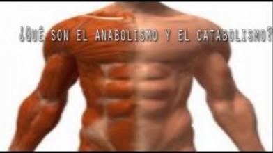 Puntos importantes para conocer el Catabolismo y Anabolismo